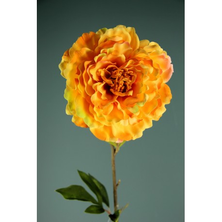 PEONIA SINGOLA YELLOW